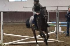 SPRING HORSE SHOW 2017_7